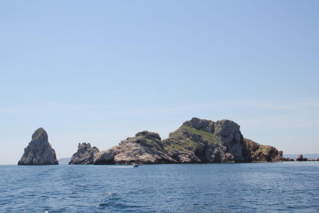 Admirer une mer de vie et de nature