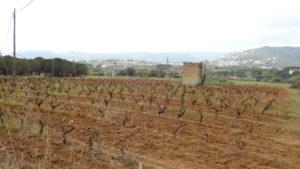 camp de vinyes de Calonge